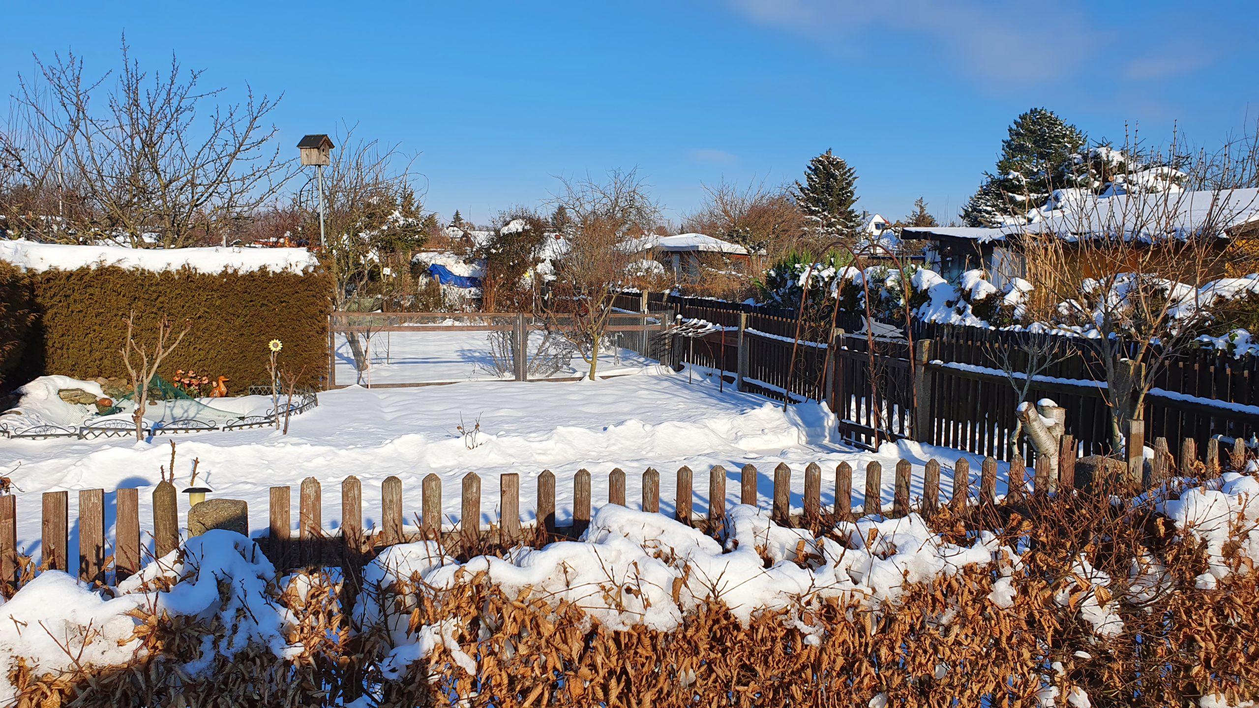 Winter 2021 (1)