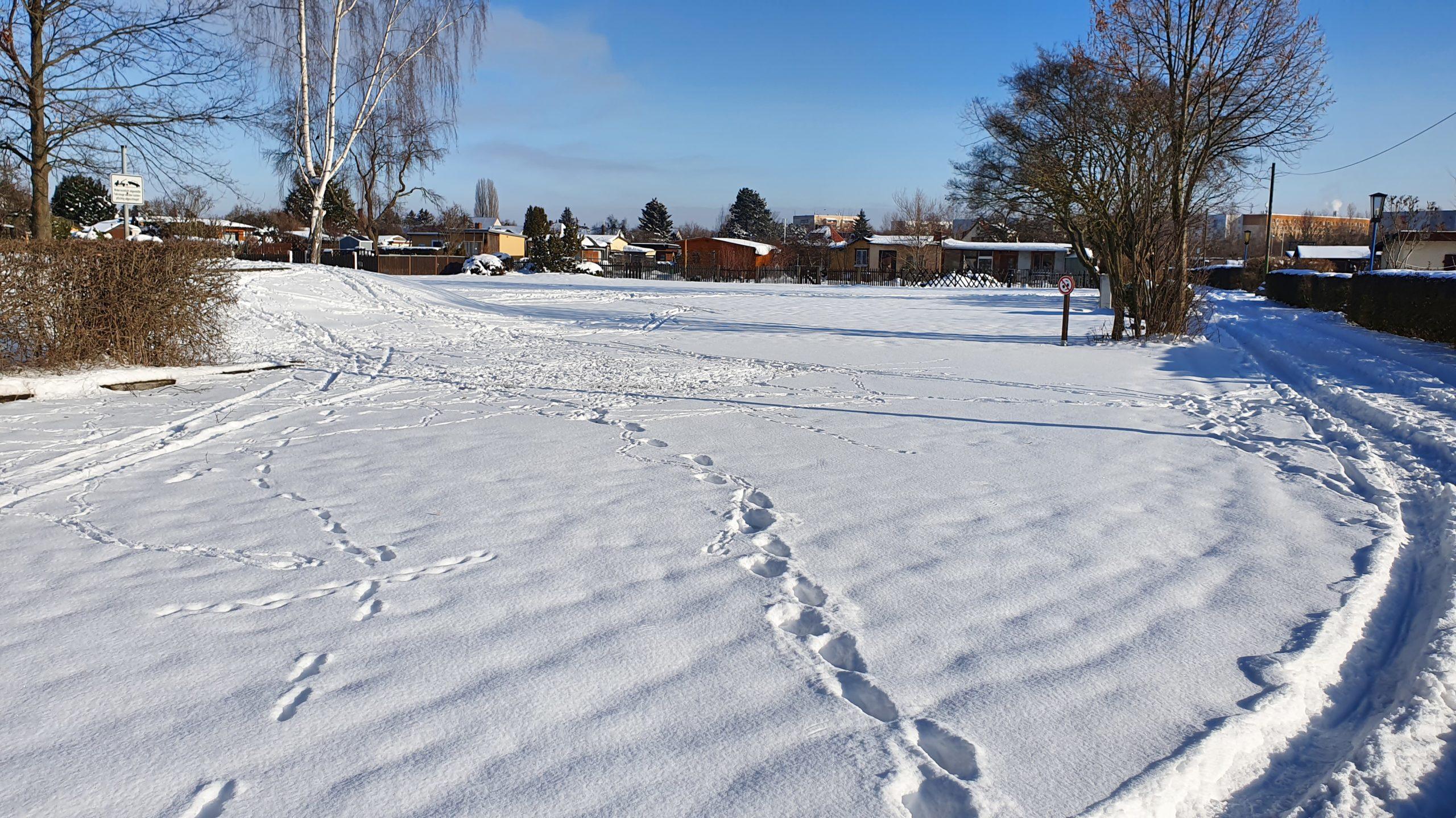 Winter 2021 (12)