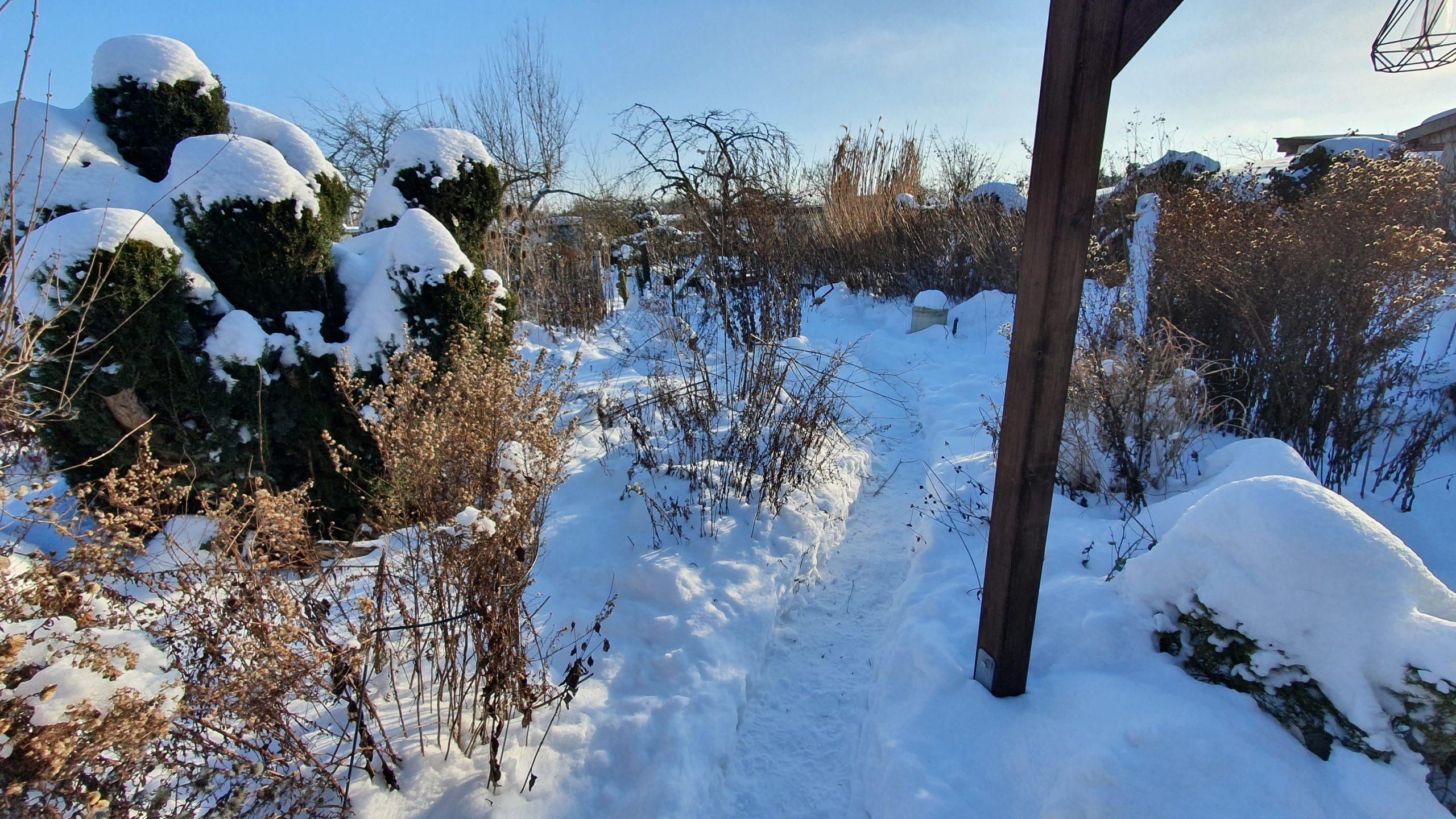 Winter 2021 (16)