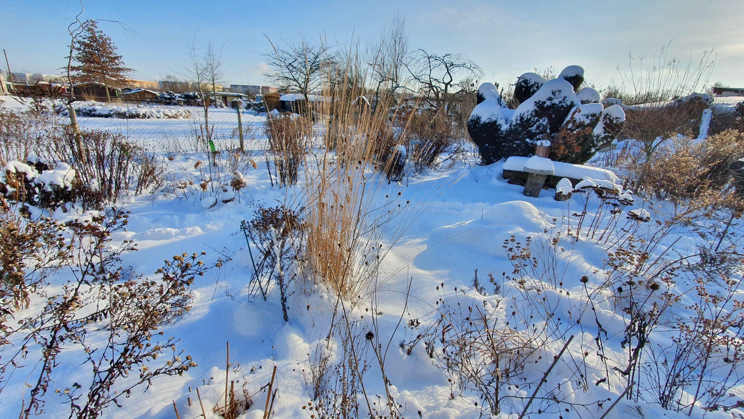 Winter 2021 (17)