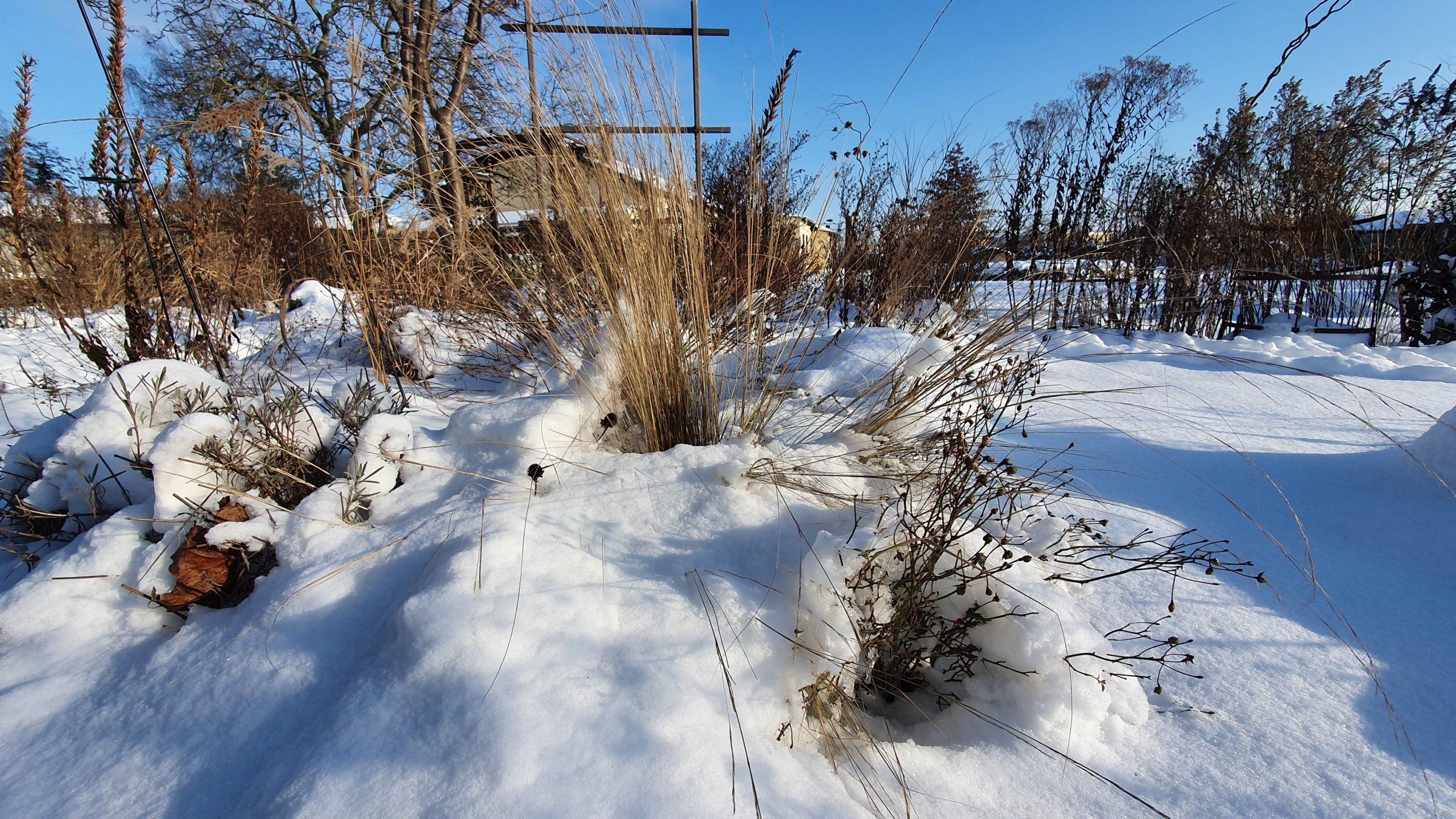 Winter 2021 (18)